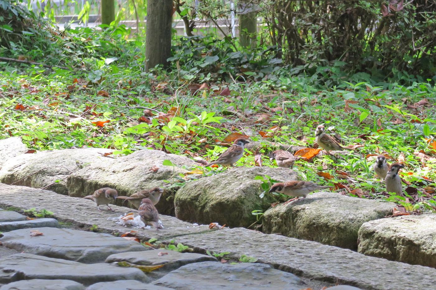 はなしょうぶ園の近くにある休憩所。80代と思われる方がスズメに餌をあげていました。