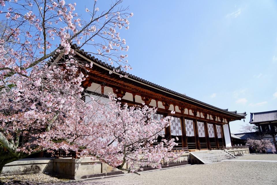 大講堂と桜