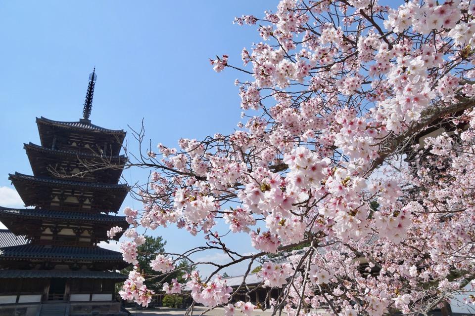 境内の中には2本だけしか桜がないのですが、華やかでした。