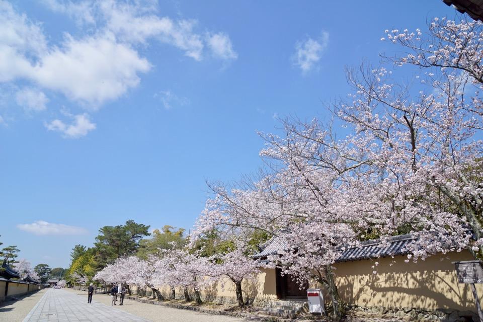 夢殿へ向かう道はこの通りの桜並木