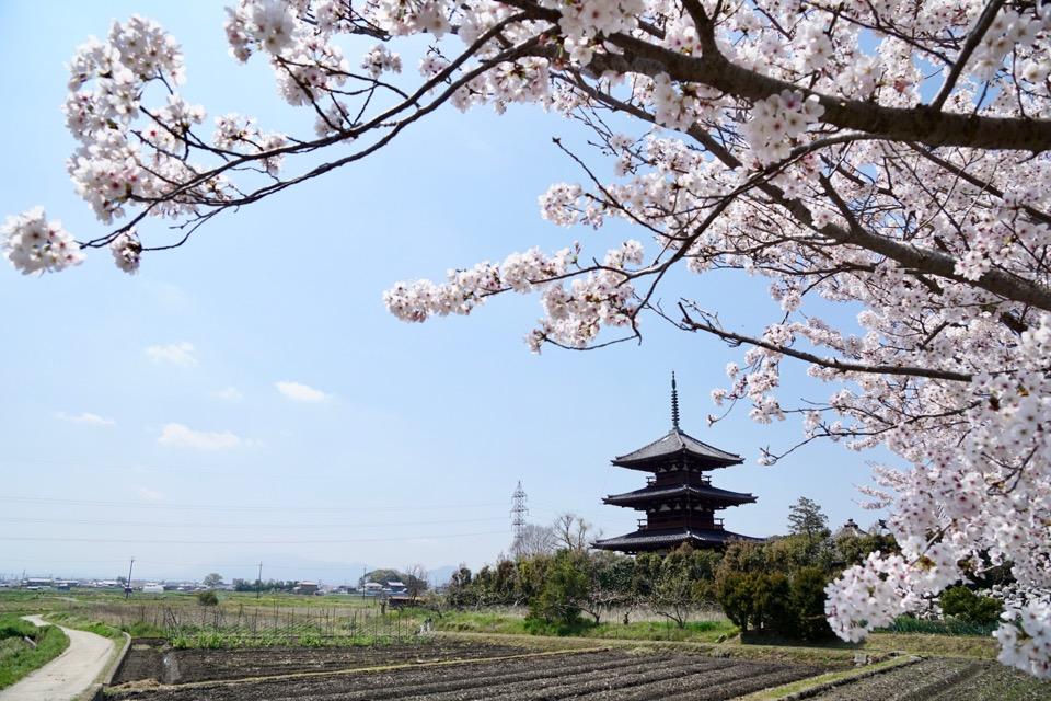 近くには同じく世界遺産の法起寺があります。