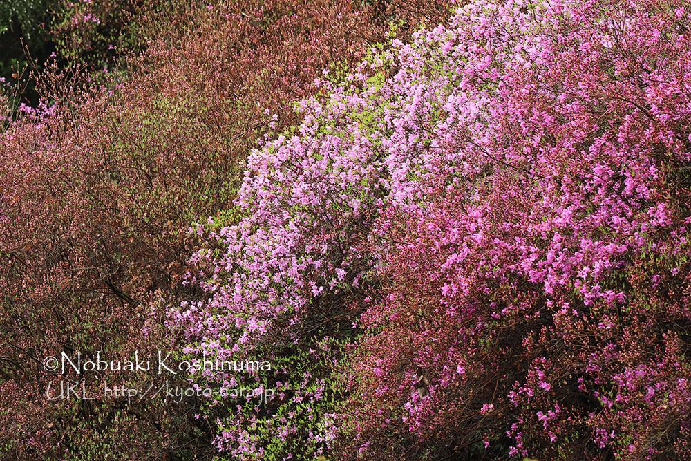 春の開花期も素敵な岩船寺に行ってきました。