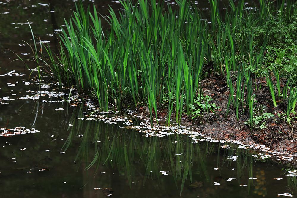 池に浮かぶ桜の花びら。時の流れを感じます。