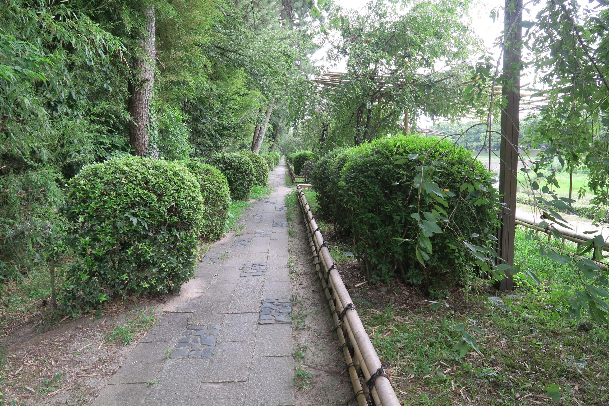 帰りは歩行者優先の道で帰りました。