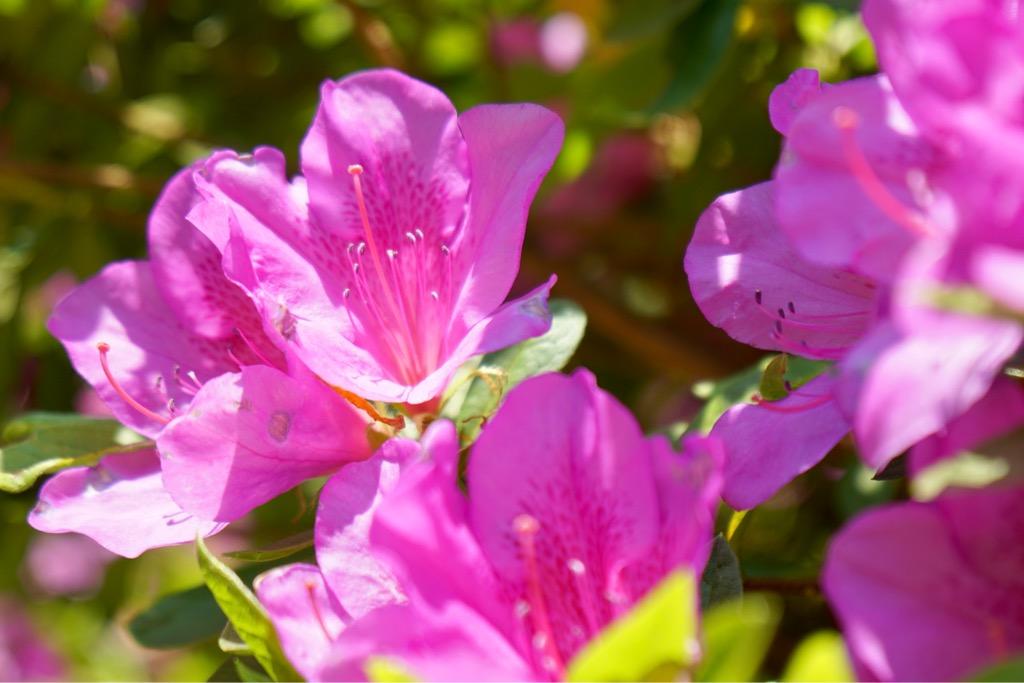 ピンク白、紫が入り混じってとても綺麗でした。