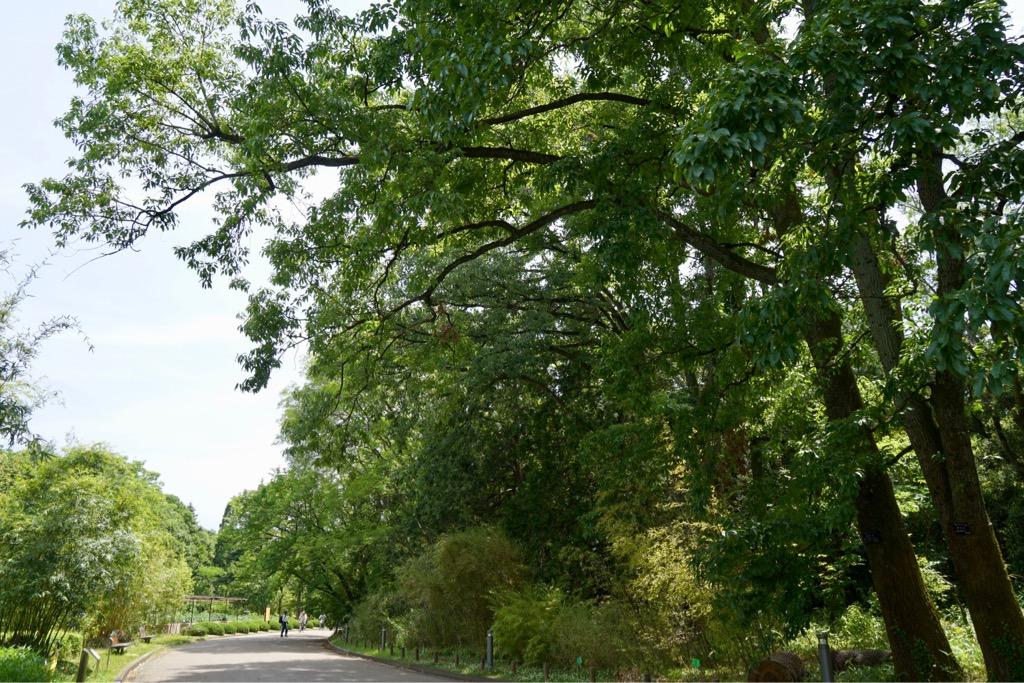 大きな木々がいっぱいでとても気持ちがいいです。