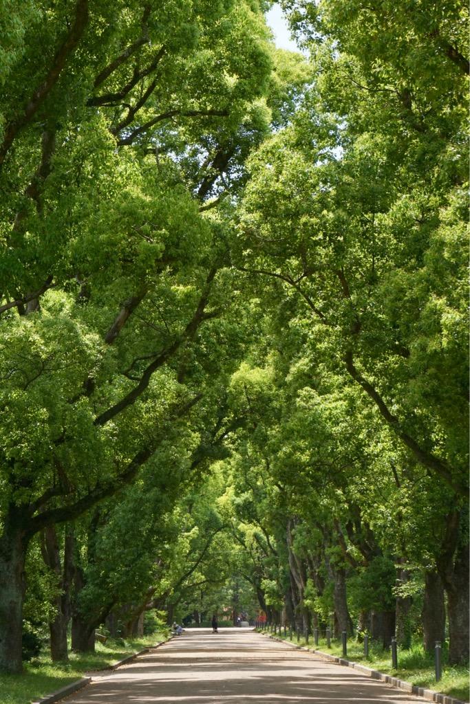 立派な木が多くて美しいです。