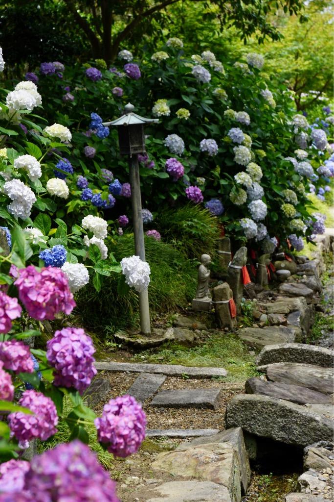 お地蔵さまの周りにもとても綺麗な紫陽花が咲き誇っていました。