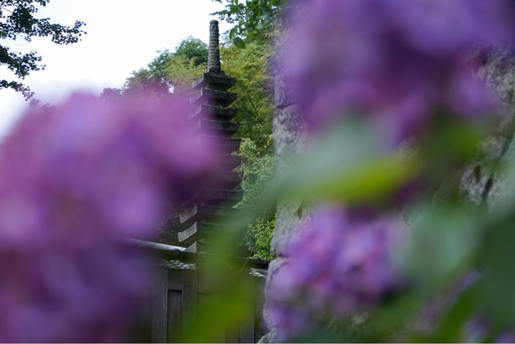 濃い紫も素敵です。