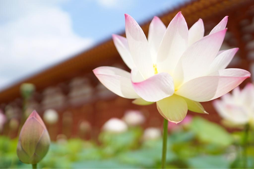 朱色の建物に蓮の花が映えてさらに可愛らしく見えます。