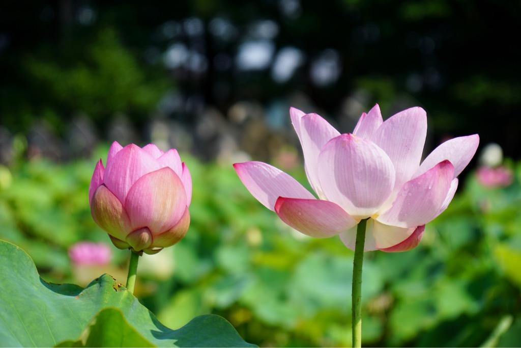 美しい大輪の花がいっぱいです。