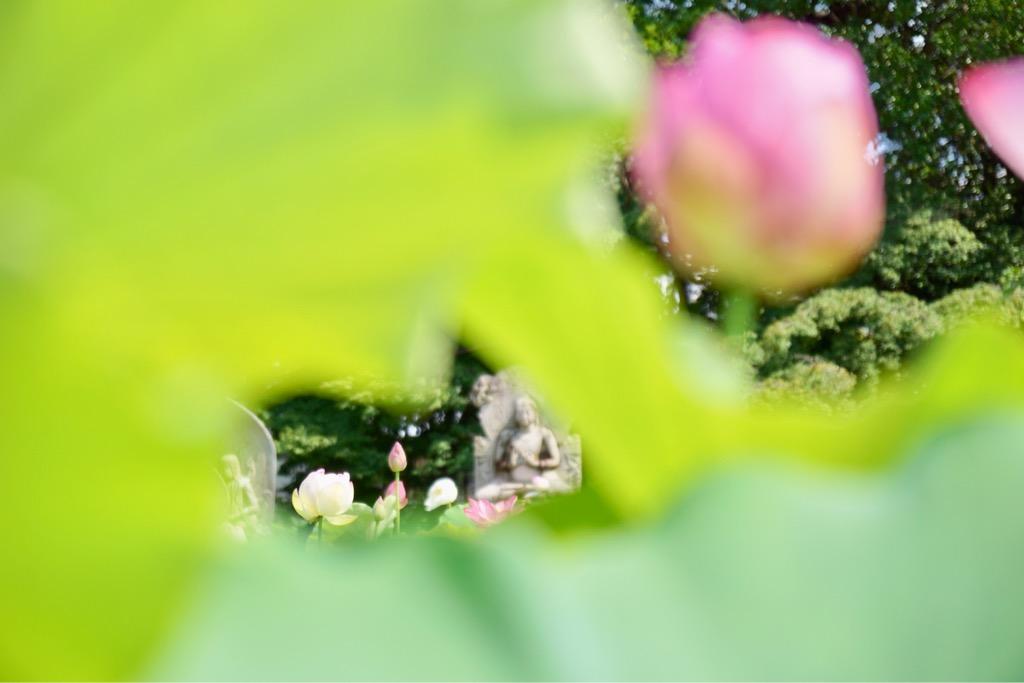 お地蔵様はどんなお花と一緒にあっても素敵ですね。