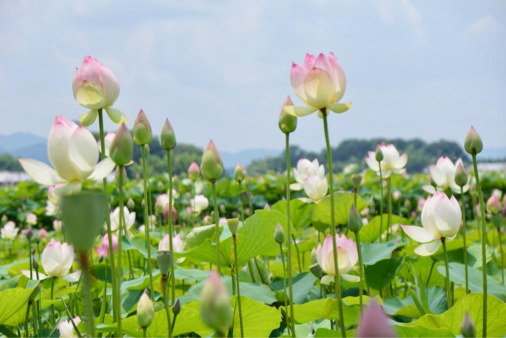 自然は不思議ですね。とはいえ花は両方ともとても綺麗でした。