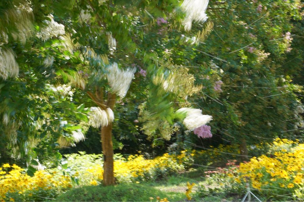 サルスベリの花が強風で散る姿がまたとても綺麗でした。
