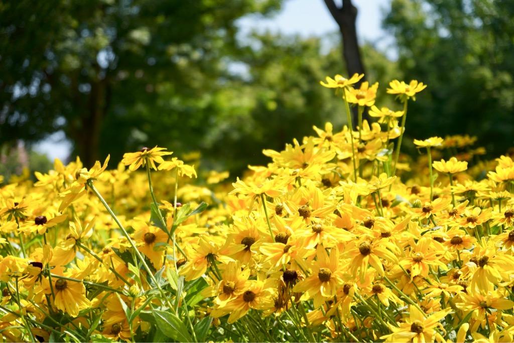 背の低いお花ですが、いっぱい咲いていると華やかで輝いてました。