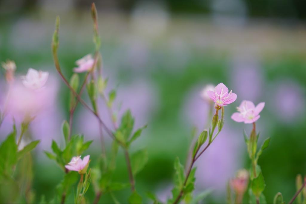 あぜ道には小さいお花もいっぱい。