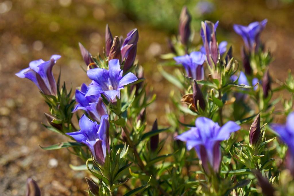 紫の美しいお花。