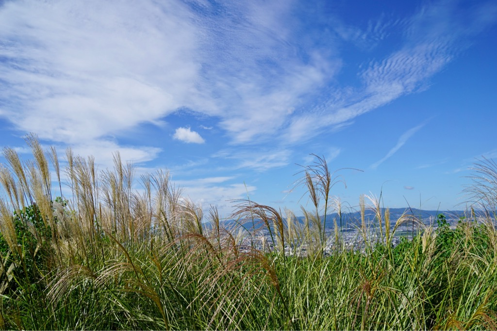 山頂付近はススキが。秋ですね。