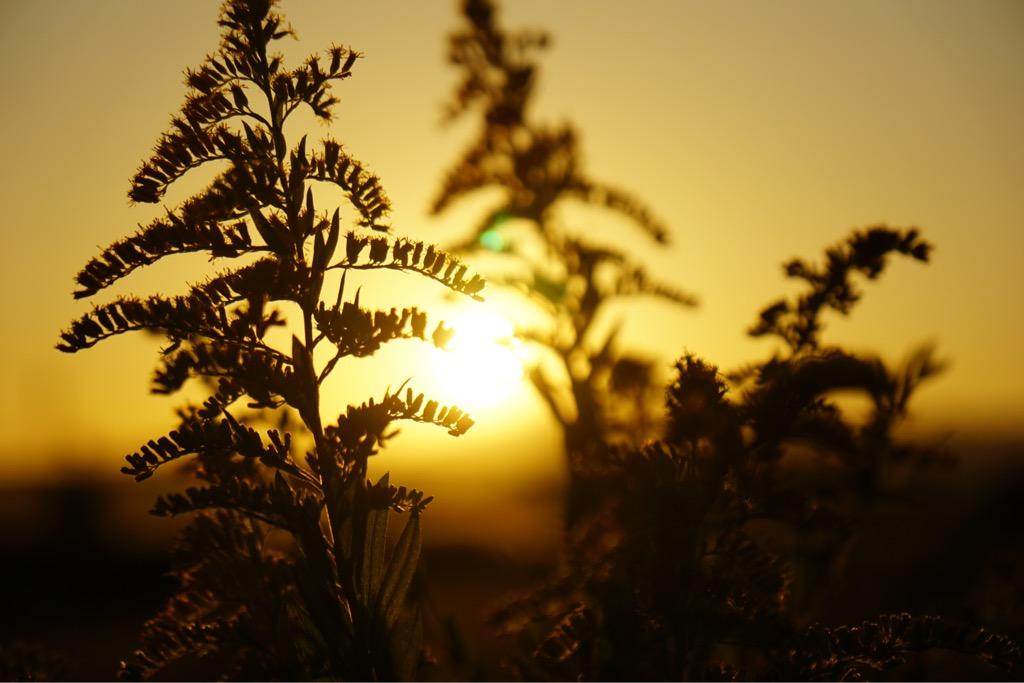 平城京は夕陽の名所です。