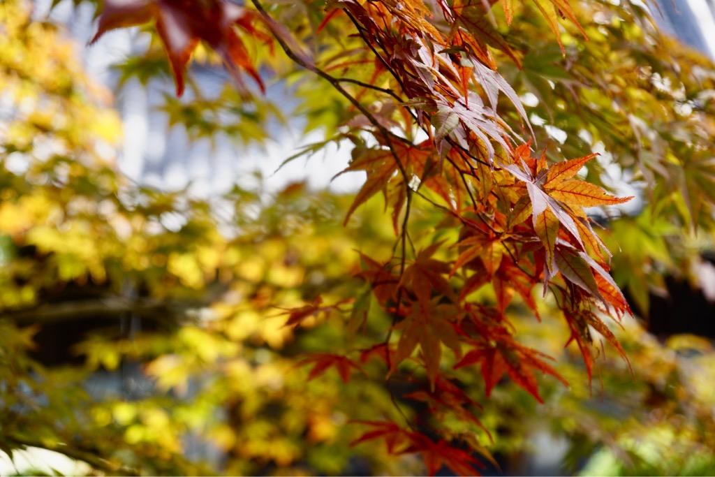 境内では紅葉も始まっています。