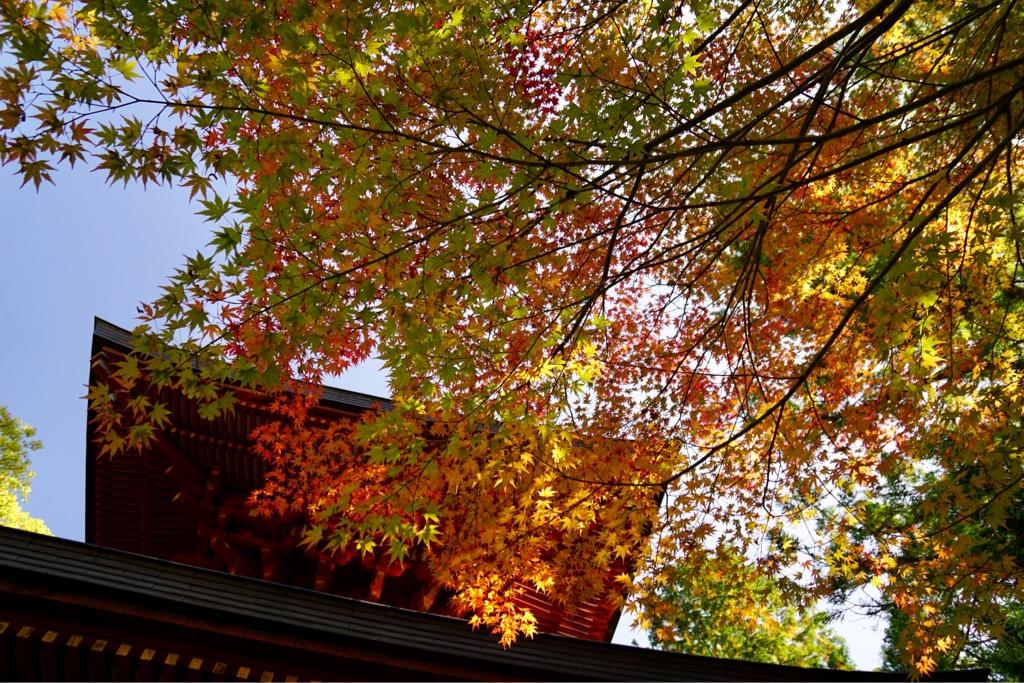 まだまだ青い紅葉も多かったです。