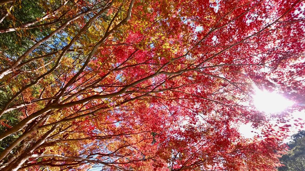 この紅葉が池に映り込む姿が有名です。