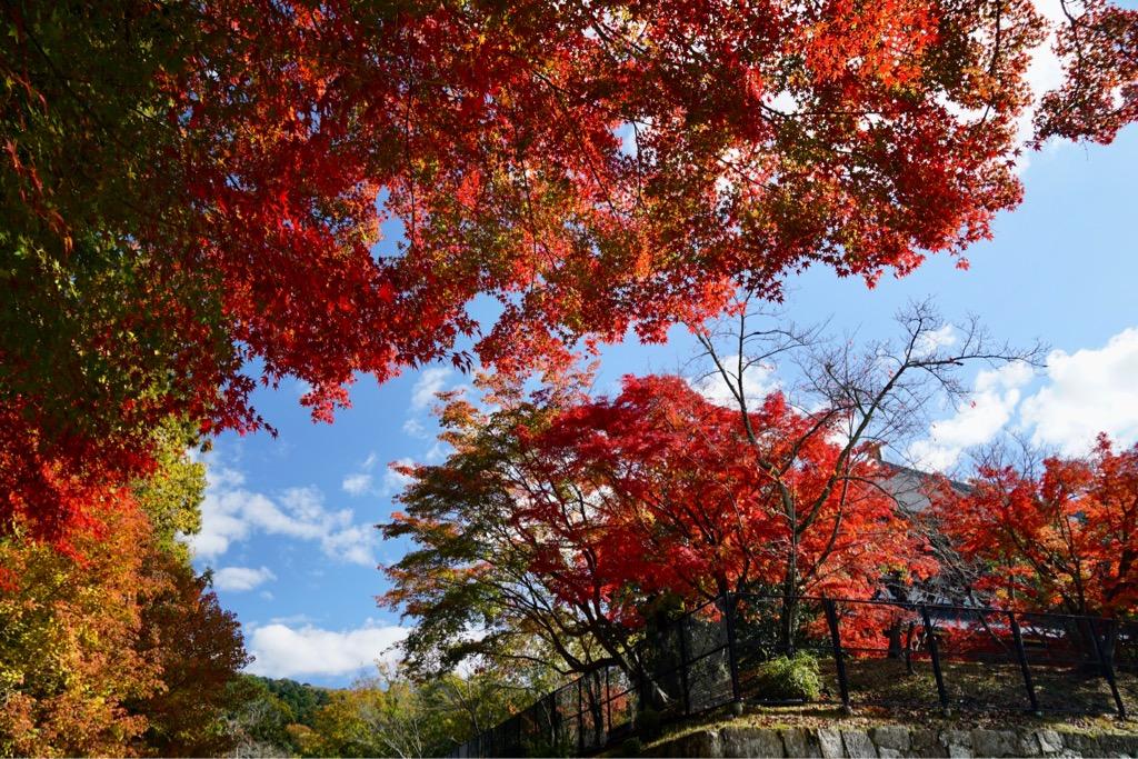 東大寺の裏 真っ赤に染まっていました。