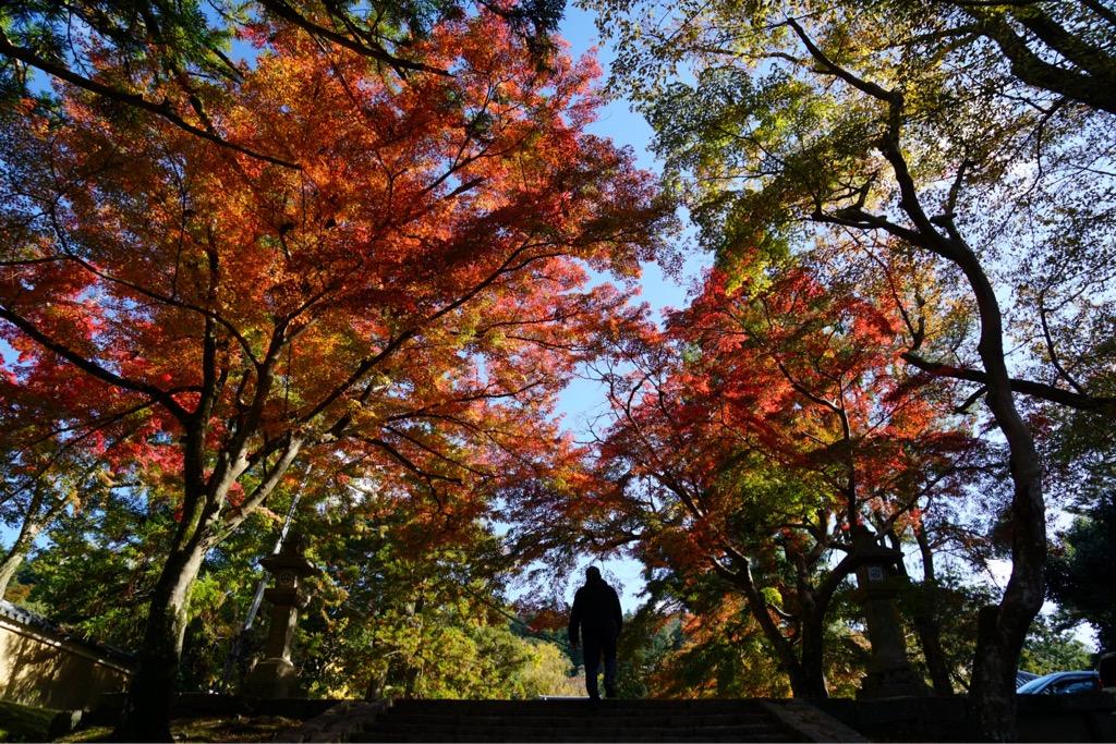 手向山八幡宮 こちらは紅葉の名所として知られています。