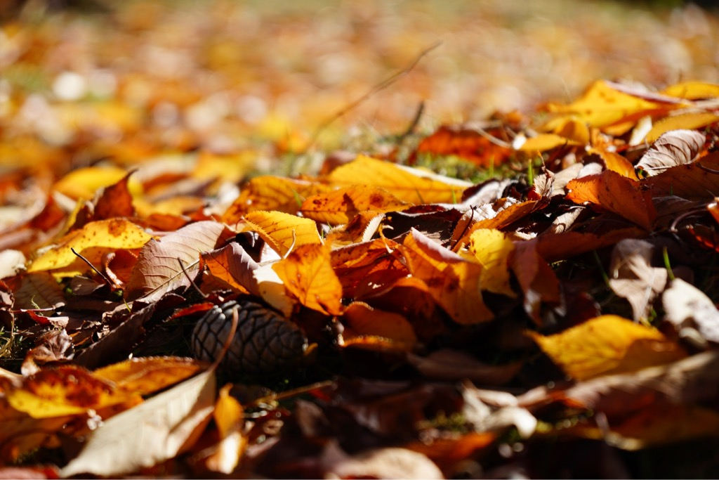 落ち葉も素敵です。