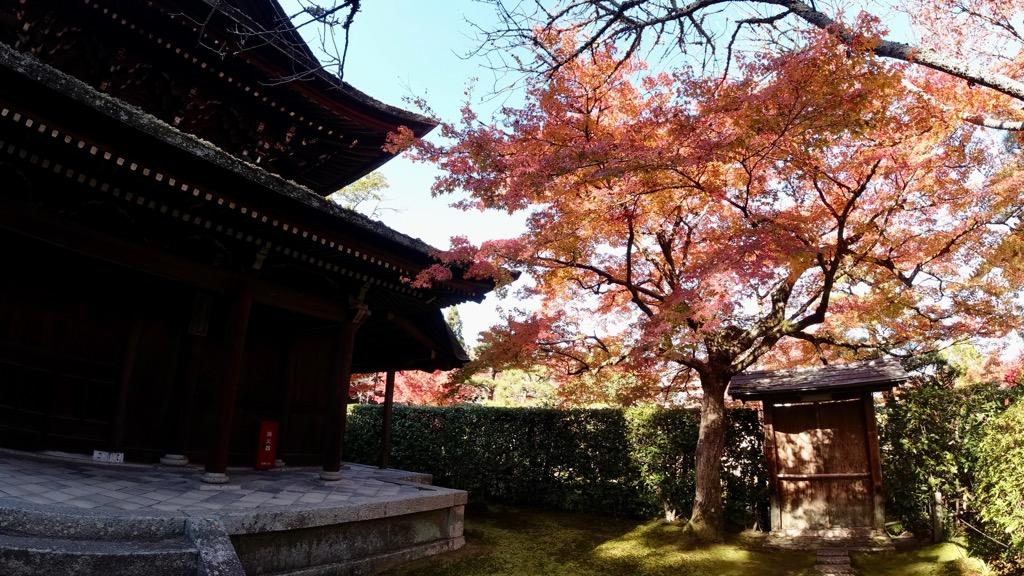 境内は山際にあり日陰になるところもあるので紅葉はまだこれからでした。