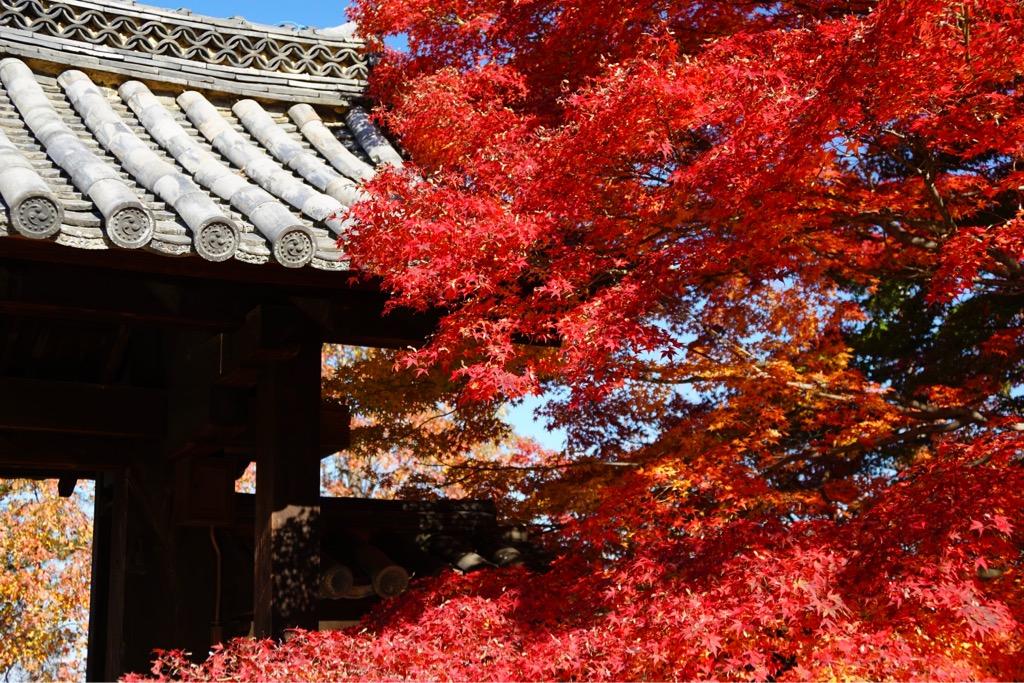 山門の紅葉もとても素晴らしいです。