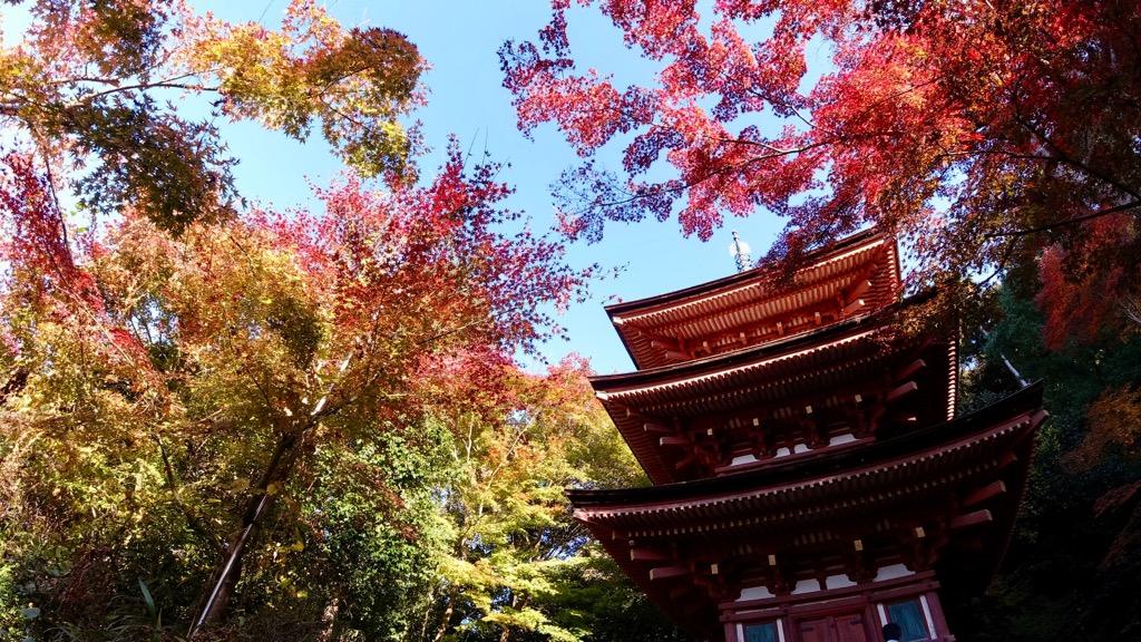 浄瑠璃寺の紅葉を見てきました。