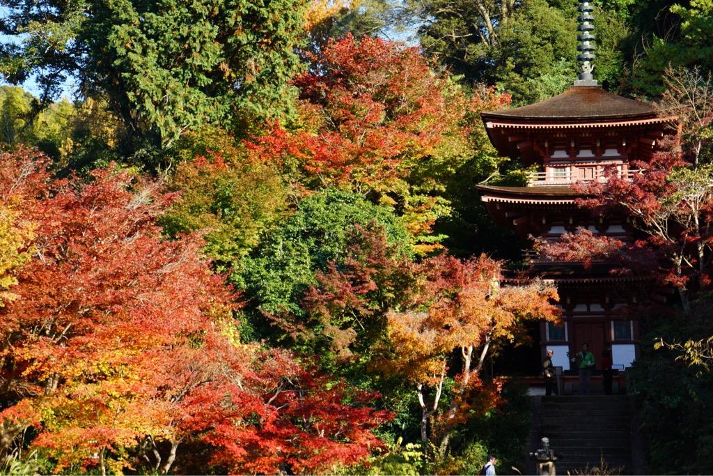三重塔の周りの紅葉が見事です。