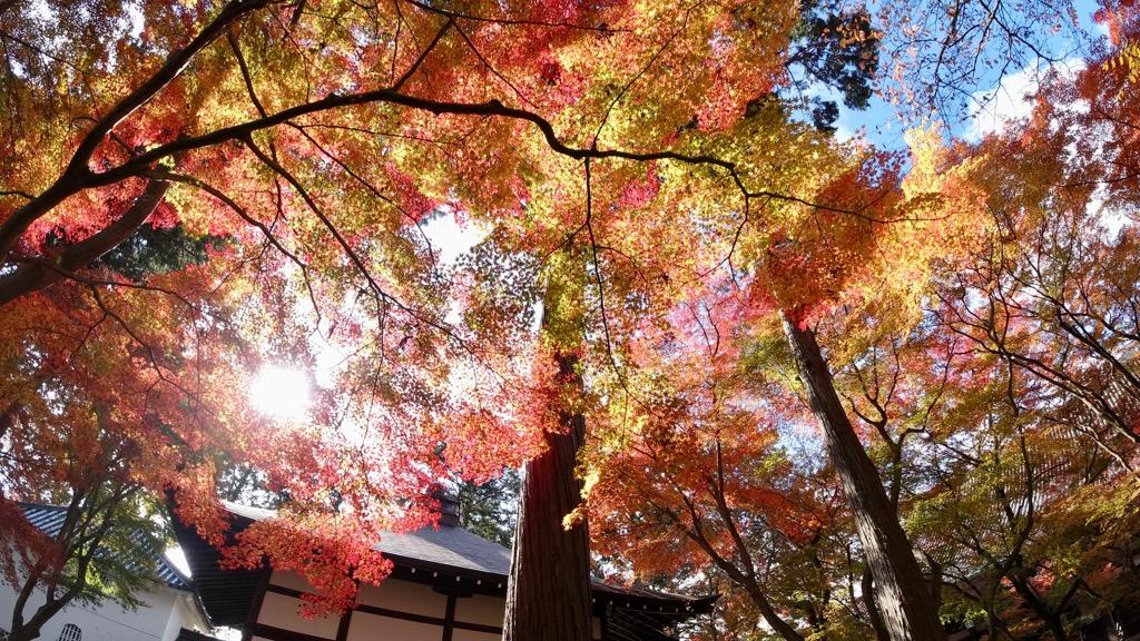 紅葉が素晴らしかったです。