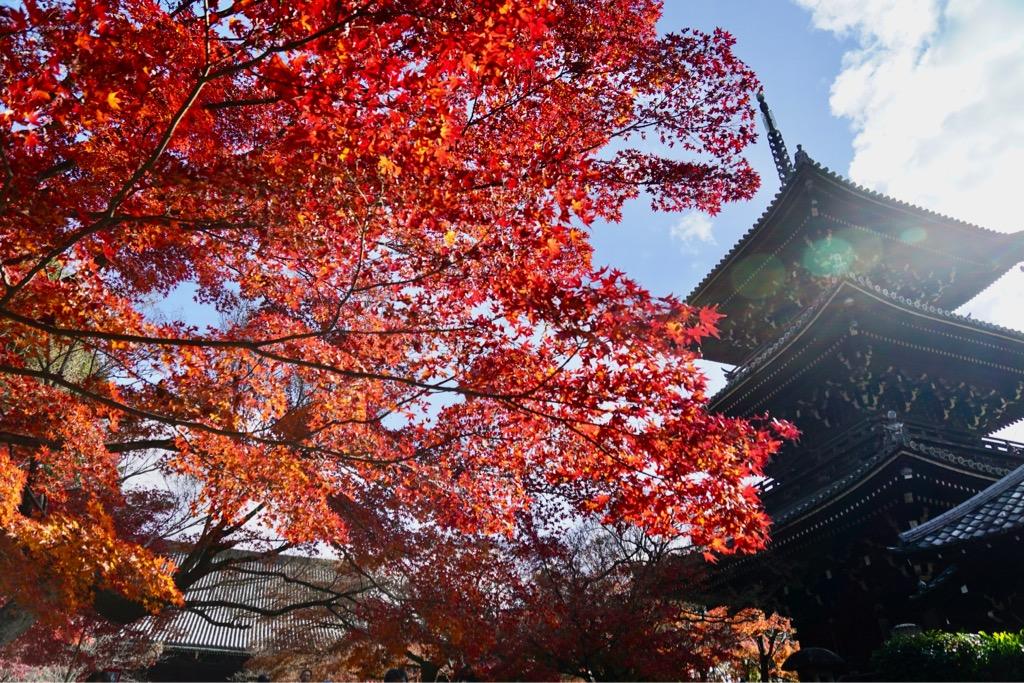 三重の塔と紅葉もまた最高です。雪景色も美しいということです。