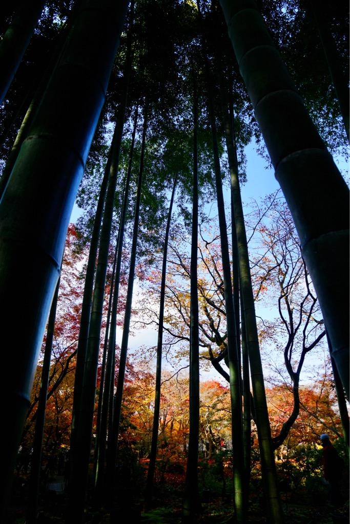 境内には竹林と紅葉がいっぱい。