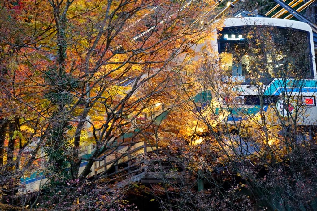 夕方になると叡山電車のもみじのトンネルがライトアップされます。