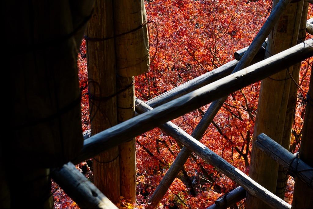 足場の間からも真っ赤に染まる紅葉が見えました。