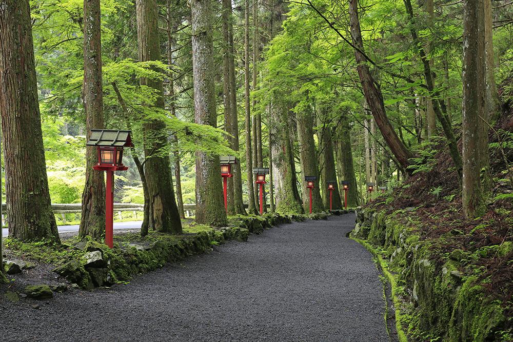 立派な杉と赤灯篭で雰囲気のある参道でした。