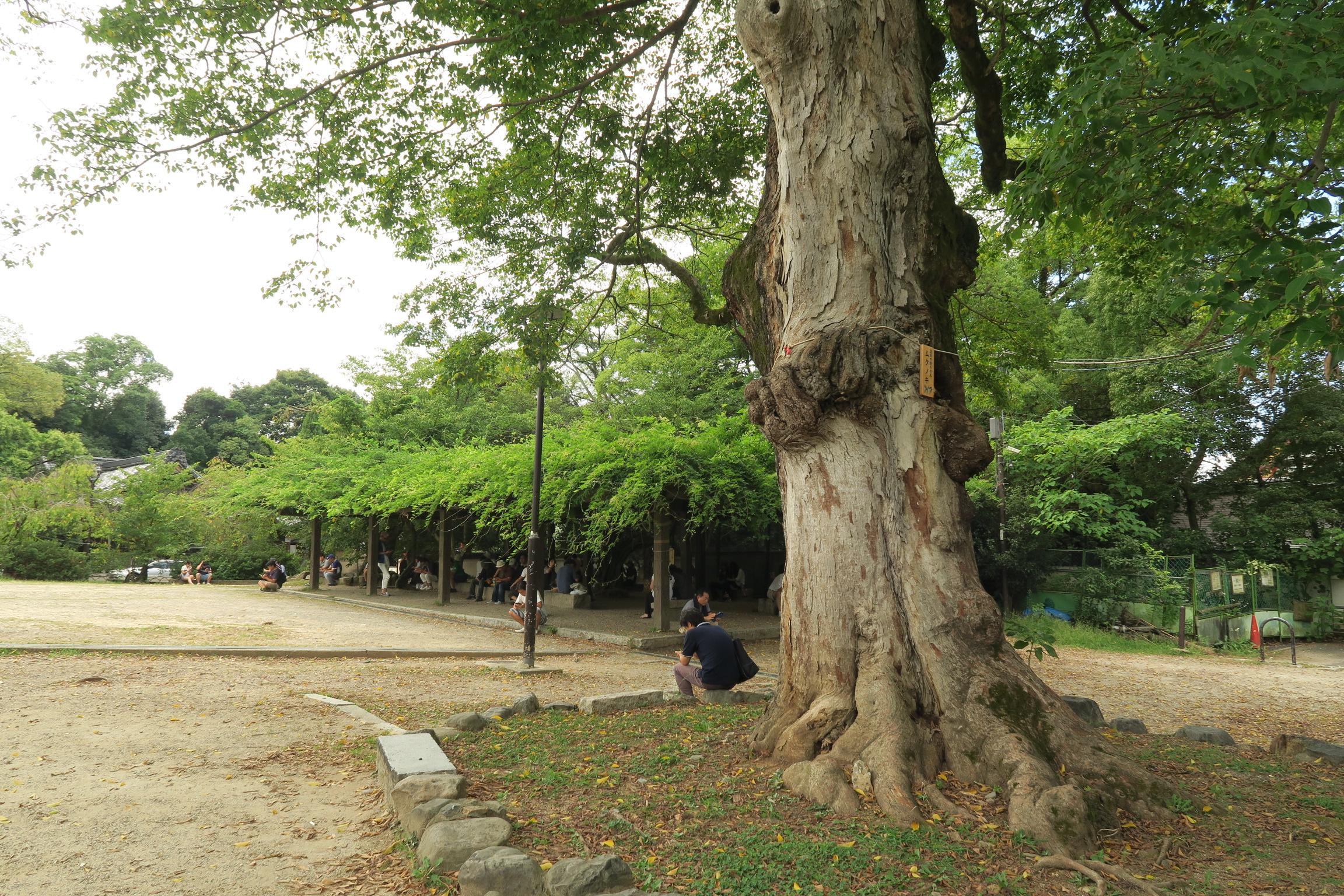 円山公園には休憩するイスもたくさんあります。この日はスマホをイジる人で賑わってました。ポケGOかな?