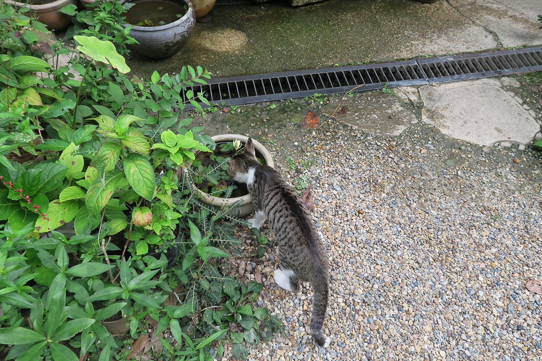 ネコちゃんがお水を飲んでいました。