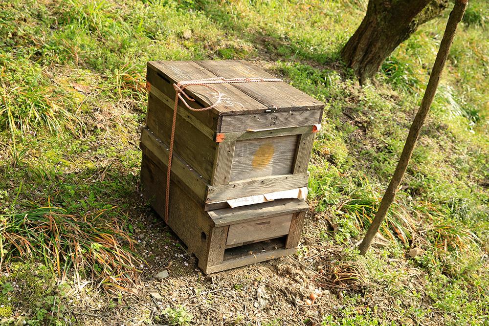 受粉の為にミツバチが放たれています。梅園のあちこちに置かれていました。