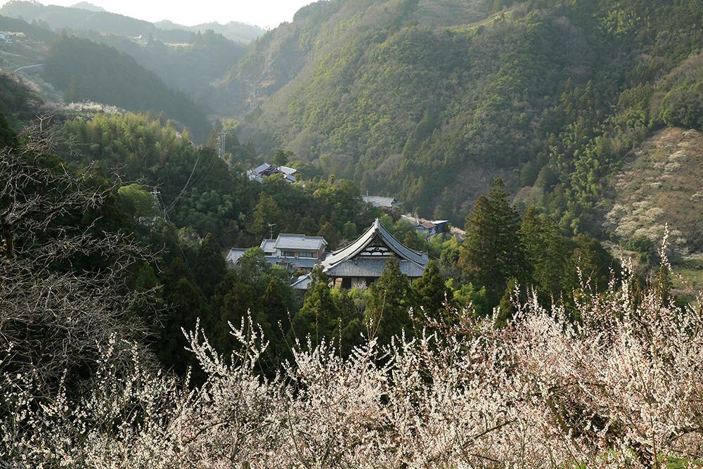 賀名生梅林が広がる谷にある寺院「教蓮寺」です。