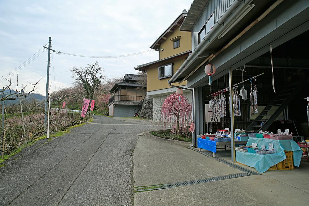 ピンク色の幟(のぼり)に沿って歩いていると地元の方のお手製の梅干しが!