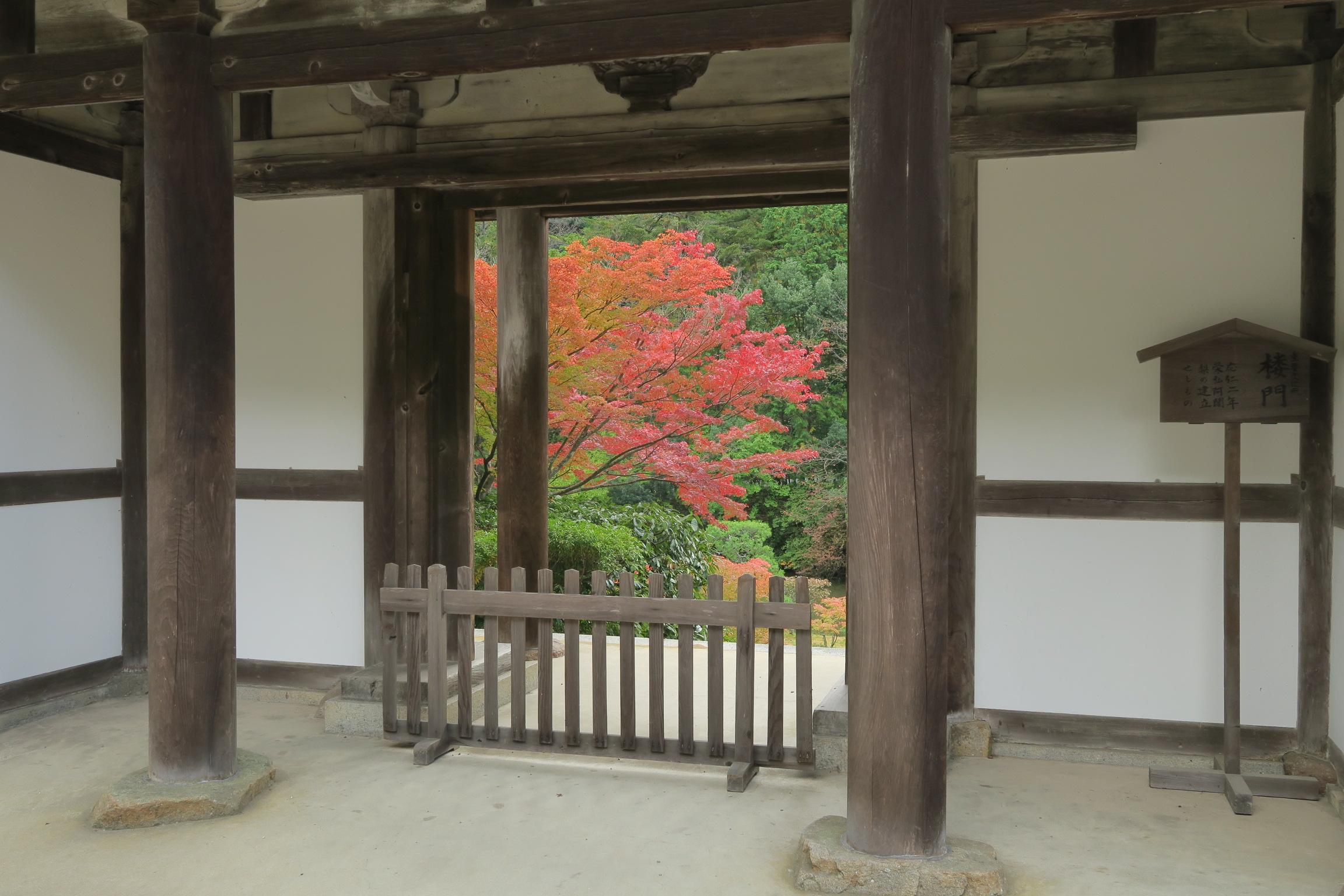 楼門(重要文化財)からみえる紅葉もきれいです。