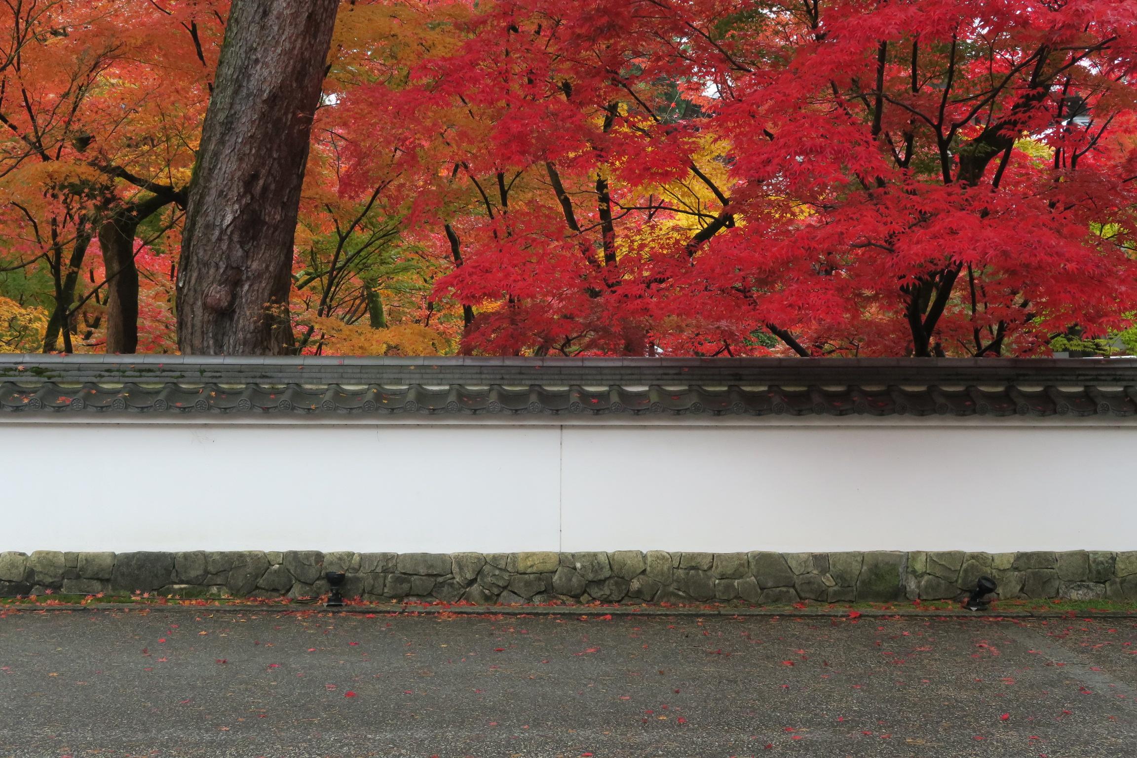 人気の理由がわかりますね。。。今日は南禅寺の天授庵に向かいますが、来年は永観堂かな。