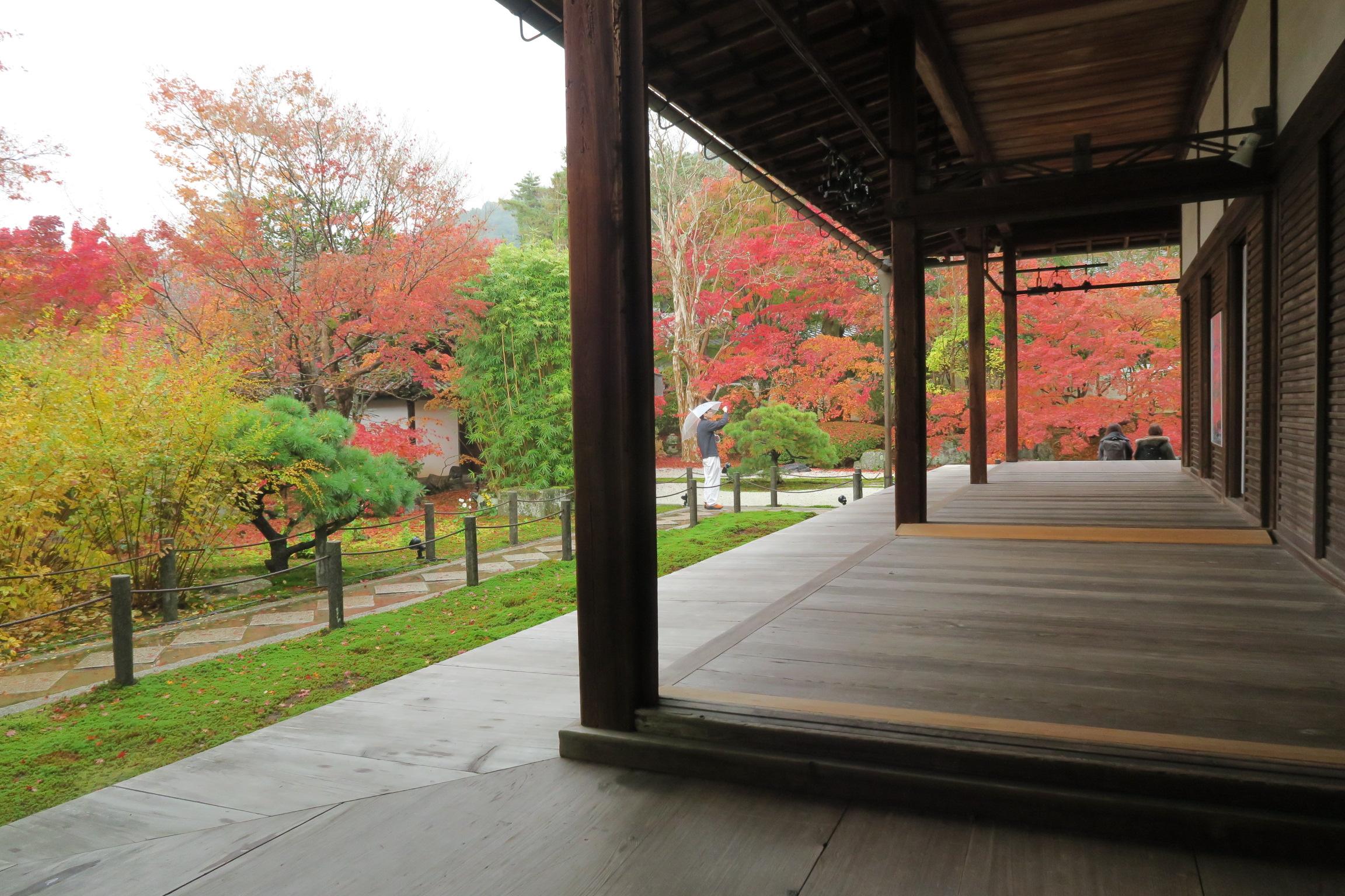 枯山水の庭と見事な紅葉が見えてきました。