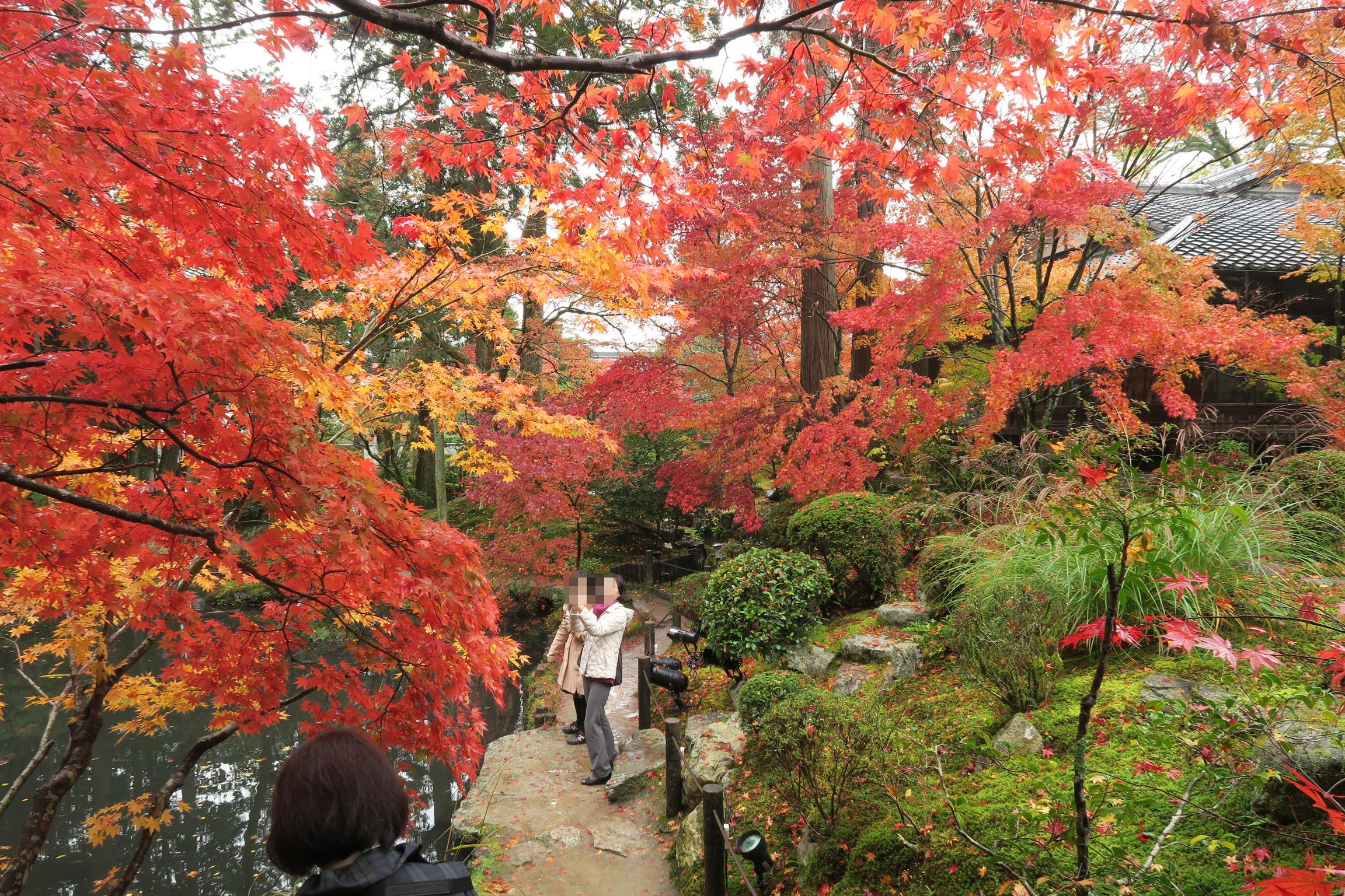 南庭も素晴らしい紅葉でした!