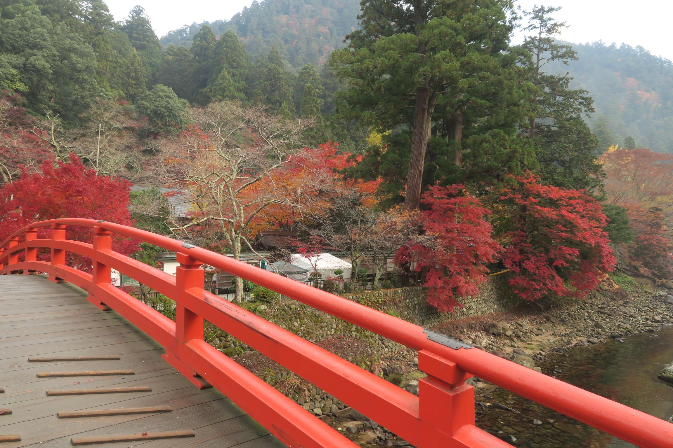 室生川沿いの紅葉も見事です。期待が膨らみますね。。。さてさて室生寺に向かいましょう!