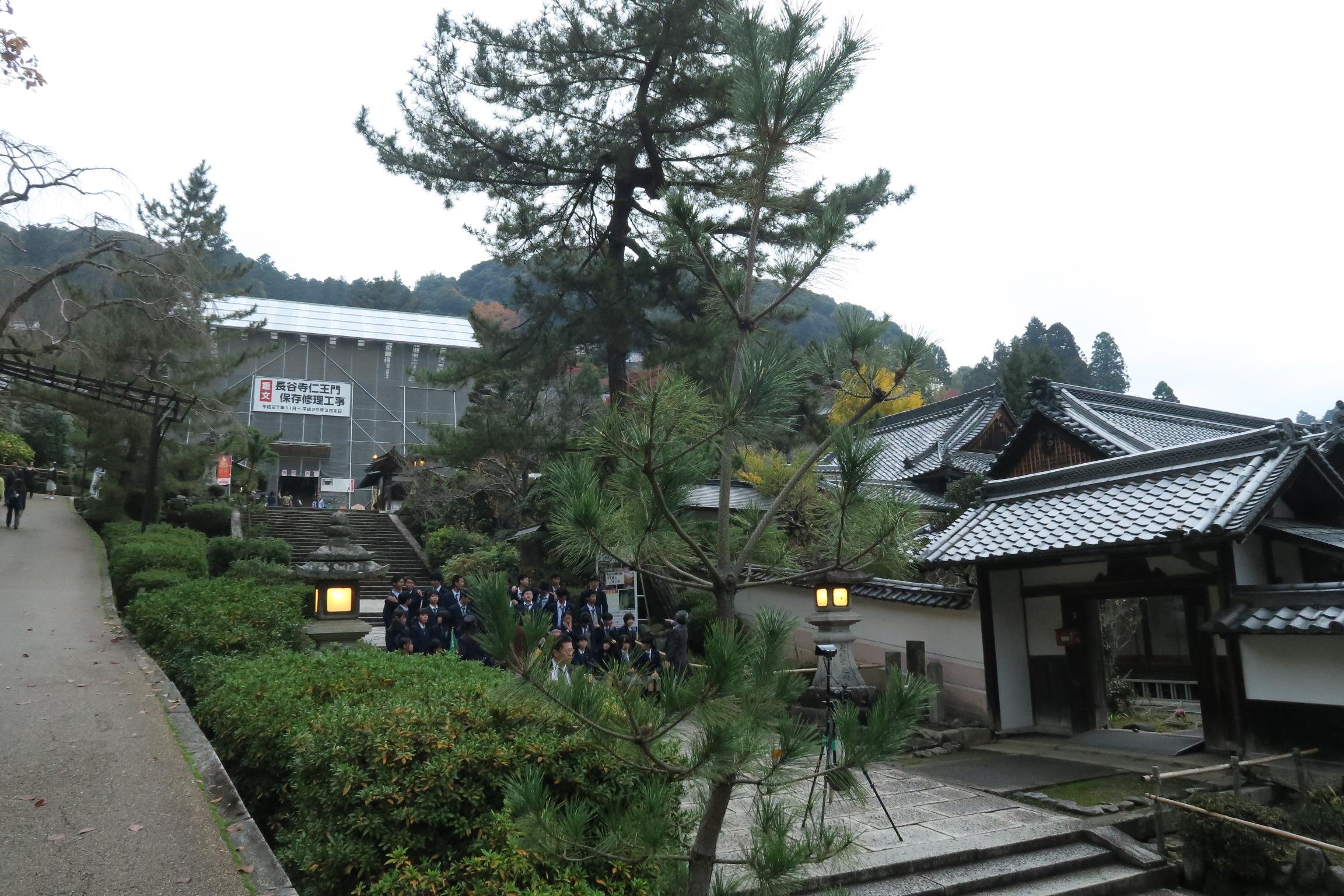 長谷寺仁王門は保存修理工事が行われていました。平成29年3月末までかかるそうです。